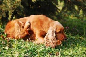 honden vlooienmiddelen