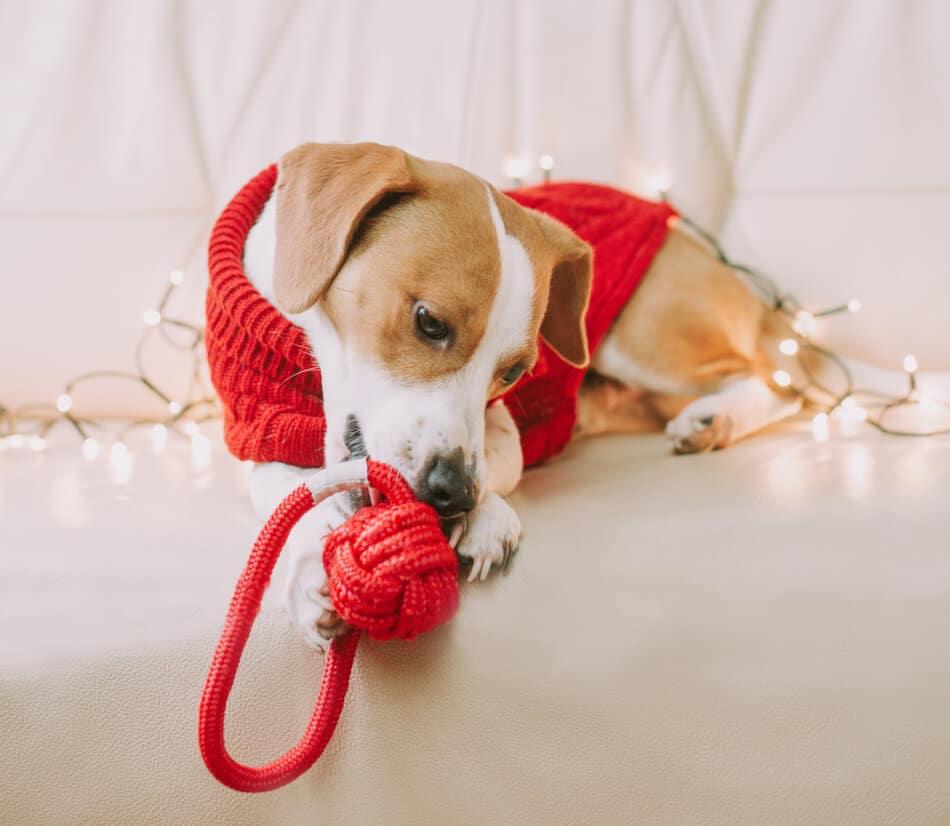 hondenspeelgoed rood